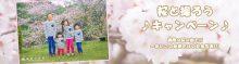 🌸桜と撮ろうキャンペーン 2017🌸